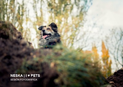 NESKA | I ♥ PETS